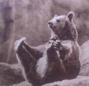 stretching-bear