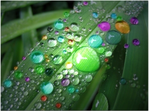 bow__raindrop_by_aredrop